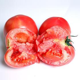 优选品质 陕西普罗旺斯沙瓤西红柿