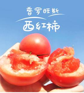 【沙瓤】普罗旺斯沙瓤西红柿 肉厚味甜 现摘现发4.5斤装 小时候的味道