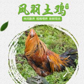 【全国包邮】凤羽土鸡(阉鸡) 4.3-4.6斤/只