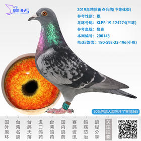 2019年精挑雨点台鸽-雄-编号200143