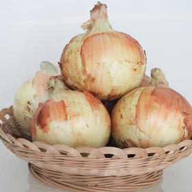 【战疫助农】云南元谋洋葱 5斤/9斤装 黄葱