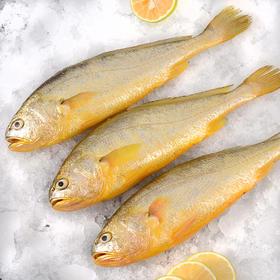 黄花鱼 500g±50g/条 2条装