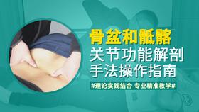 骨盆和骶髂关节功能解剖-手法操作指南