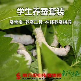 【珠三角包邮】学生科普蚕宝宝套餐(蚕比较大个)15条/套