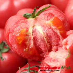 【珠三角包邮】柿愿 普罗旺斯西红柿 4斤±3两/  箱