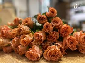 A级香妃-花园玫瑰