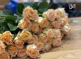 A级柏拉图-花园玫瑰