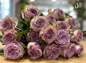 A级多洛塔-花园玫瑰