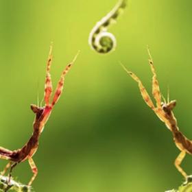 【动植物游学】探寻高黎贡山 非物质文化遗产 物种基因库 昆虫 鸟类 之旅