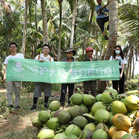 现摘发货海南椰子 长在树上的天然饮品4个装 包邮