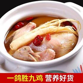 【生鲜预售】青山乳鸽(每周三、周五发货)