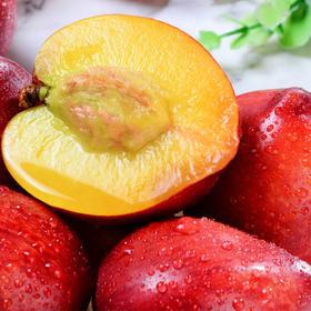 山东沂蒙山新鲜油桃 又脆又甜的黄心大桃子 孕妇孩子超爱吃 现摘现发新鲜如初 果园直发