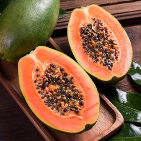 云南河口红心木瓜 香甜绵软 入口即化 美容养颜 天然水果 做甜品 木瓜牛奶