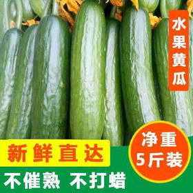 #助农# 新鲜小黄瓜农家自种 原生态种植 现摘现发 新鲜直达 生吃凉拌夏日解渴