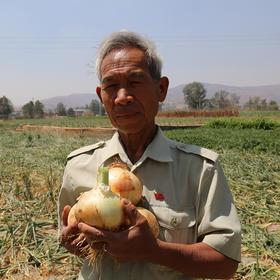 【助农产品】滞销求救!央视报道,云南10万吨出口级洋葱困在地里!价格贱到农民流泪,仅售19.9元/9斤,恳请相助。