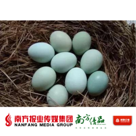 【广东省包邮】五黑鸡蛋  30个/份 (48小时内发货)