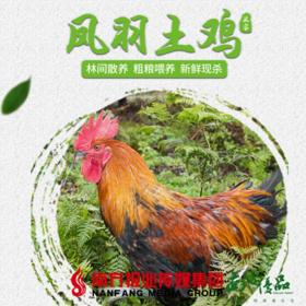 【全国包邮】凤羽土鸡(阉鸡) 4.3-4.6斤/只  (48小时之内发货)