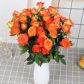 多头玫瑰(8枝+送2枝防损)(AB级)