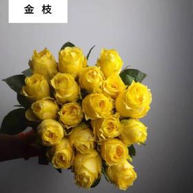 金枝玉叶黄玫瑰B级(8枝+送2枝防损耗)(花田直采,产地直发)