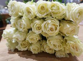A级纯洁玫瑰