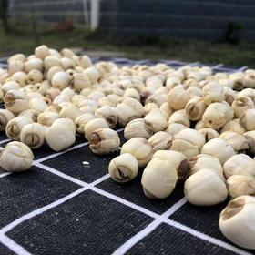 瑞金市 惠农供销优质通芯干莲子500克