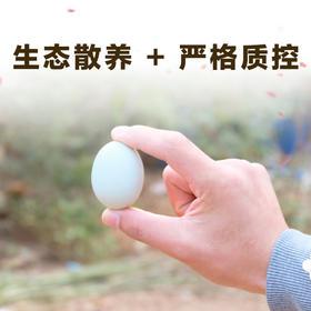 助力湖北 土鸡蛋 60枚装 周期购
