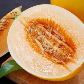 黄河冰糖蜜瓜新鲜5斤水果当季整箱脆酥黄金香瓜甜瓜