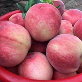 现摘新鲜水蜜桃5斤孕妇水果当季桃子毛桃油桃软桃多汁