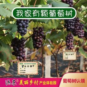 源东-精品葡萄树认领