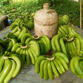 云南河口热带香蕉 自然熟香甜软糯 现摘现发 产地直发 清甜爽口 包邮