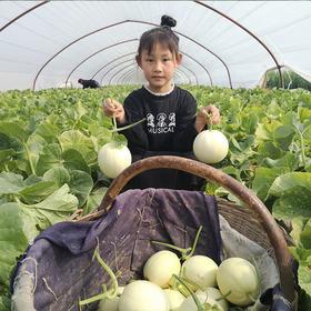 【助农产品 】18°甜蜜的阎良甜瓜,疫情伤农给贫苦瓜农生活多份甜 5斤装 包邮