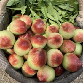 白油桃 450-500克