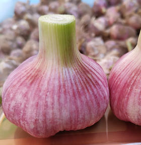 精选∣紫皮大蒜   农家自种精品大蒜5斤装  现挖现发  新鲜直发
