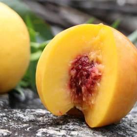 蒙阴应季锦绣黄金油桃 甜蜜多汁 个大饱满 带箱5斤装包邮
