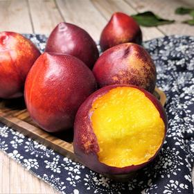 【高山油桃来了】山东黄肉油桃 惊艳红皮黄心 鲜嫩多汁 桃香馥郁 新鲜现摘