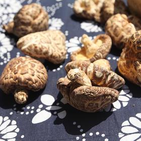 【龙门秘境】--高山野生花菇