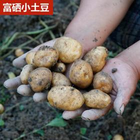 【富硒】恩施富硒小土豆 新鲜土豆 农家自种