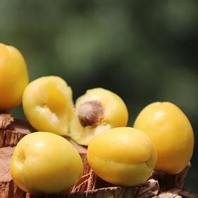 """【天山的""""白色蜂蜜""""】新疆小白杏 细腻多汁 风味香甜 来自天山脚下的美味"""