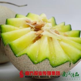 【全国包邮】海阳网纹蜜瓜 2个瓜,净重4-4.3斤 (48小时之内发货)
