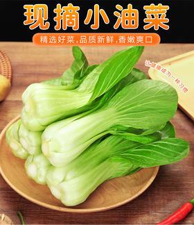 西格木乡大棚小油菜、香菜150克、菠菜、生菜、油菜组合装 现发现摘