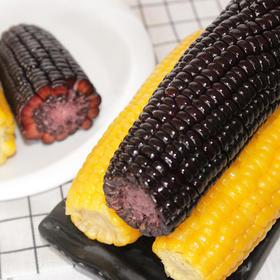 组合装10根东北糯玉米粘玉米棒非转基因真空包装新鲜即食黑黄玉米