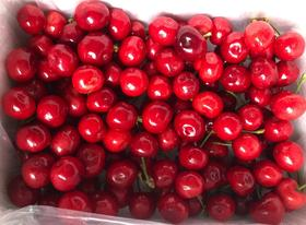 雅安精品红灯车厘子新鲜水果现摘现发4斤包邮