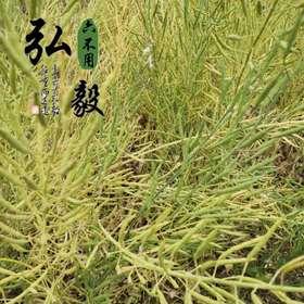 【弘毅六不用生态农场】六不用 油菜籽 农场自留种 25克/份