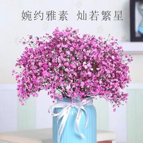 【花木禅】满天星鲜花一束(500克左右)