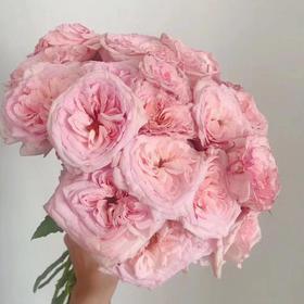 【花木禅】粉荔枝玫瑰(一股淡淡的茘枝香味)(16枝送4支防损)