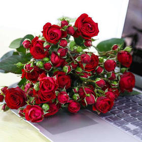 【花木禅】红色多头玫瑰(8+送2枝防损)