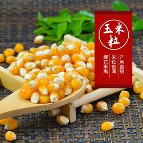蝶形球形爆米花玉米粒爆裂小玉米粒2斤家庭爆米花用玉米粒苞米粒