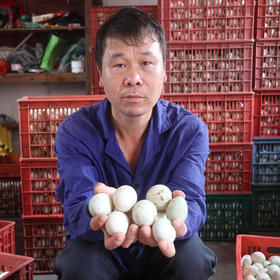 爱心助农|赣州土鸭蛋30枚包邮(自然散养 蛋黄饱满)