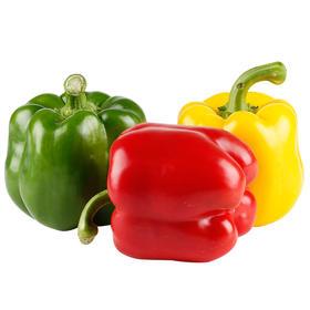 山东红青黄太空椒彩椒5斤|现摘现发 肉厚籽少 甜脆可口【应季蔬果】