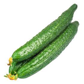 山东现摘新鲜带刺黄瓜5斤|清爽爽口 皮薄多汁 现摘现发【应季蔬果】